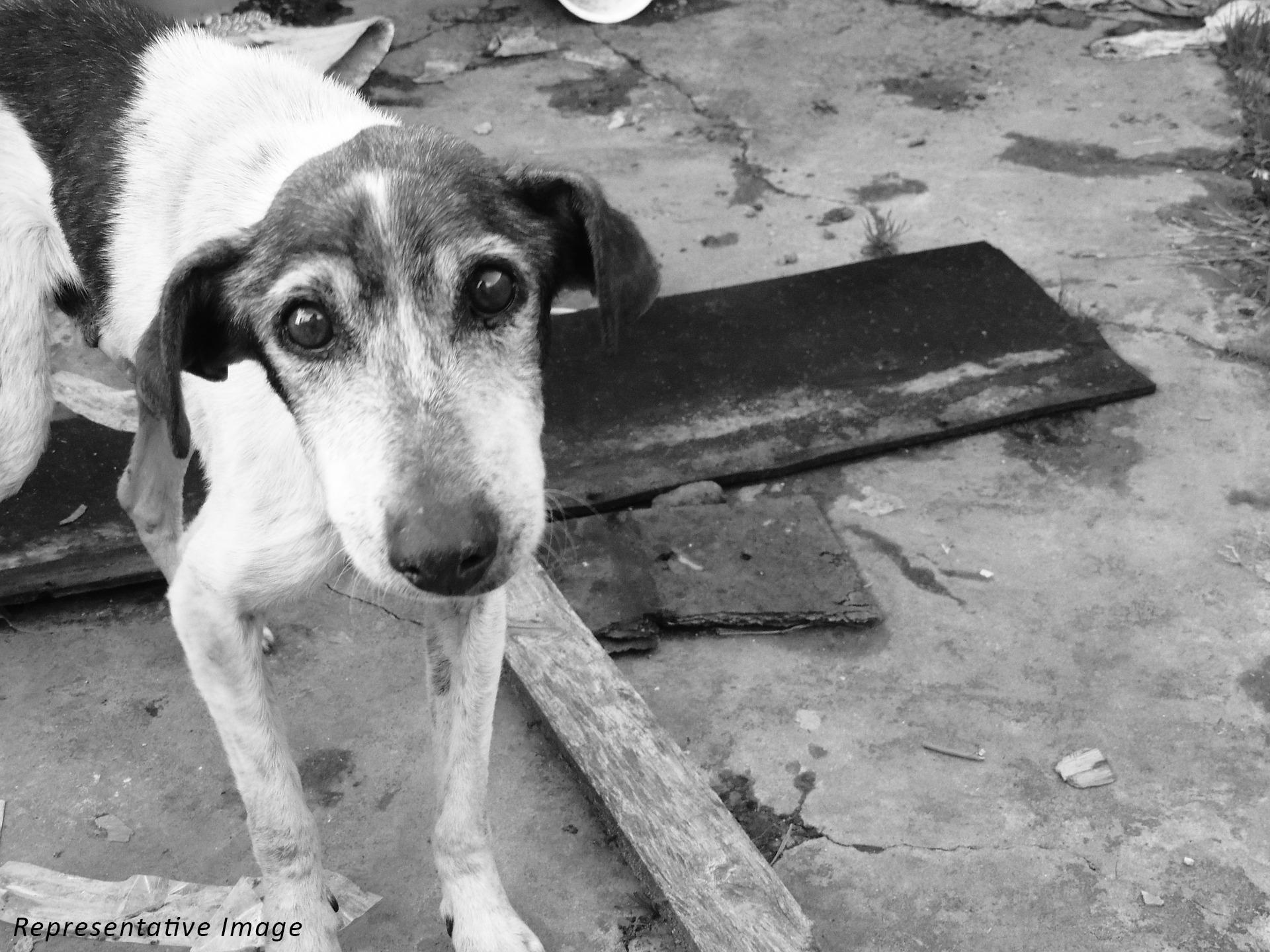 Aurangabad dog case - for blog