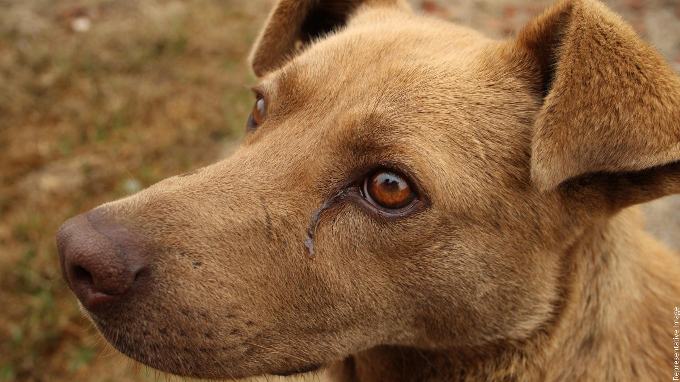 thane dog acid attack