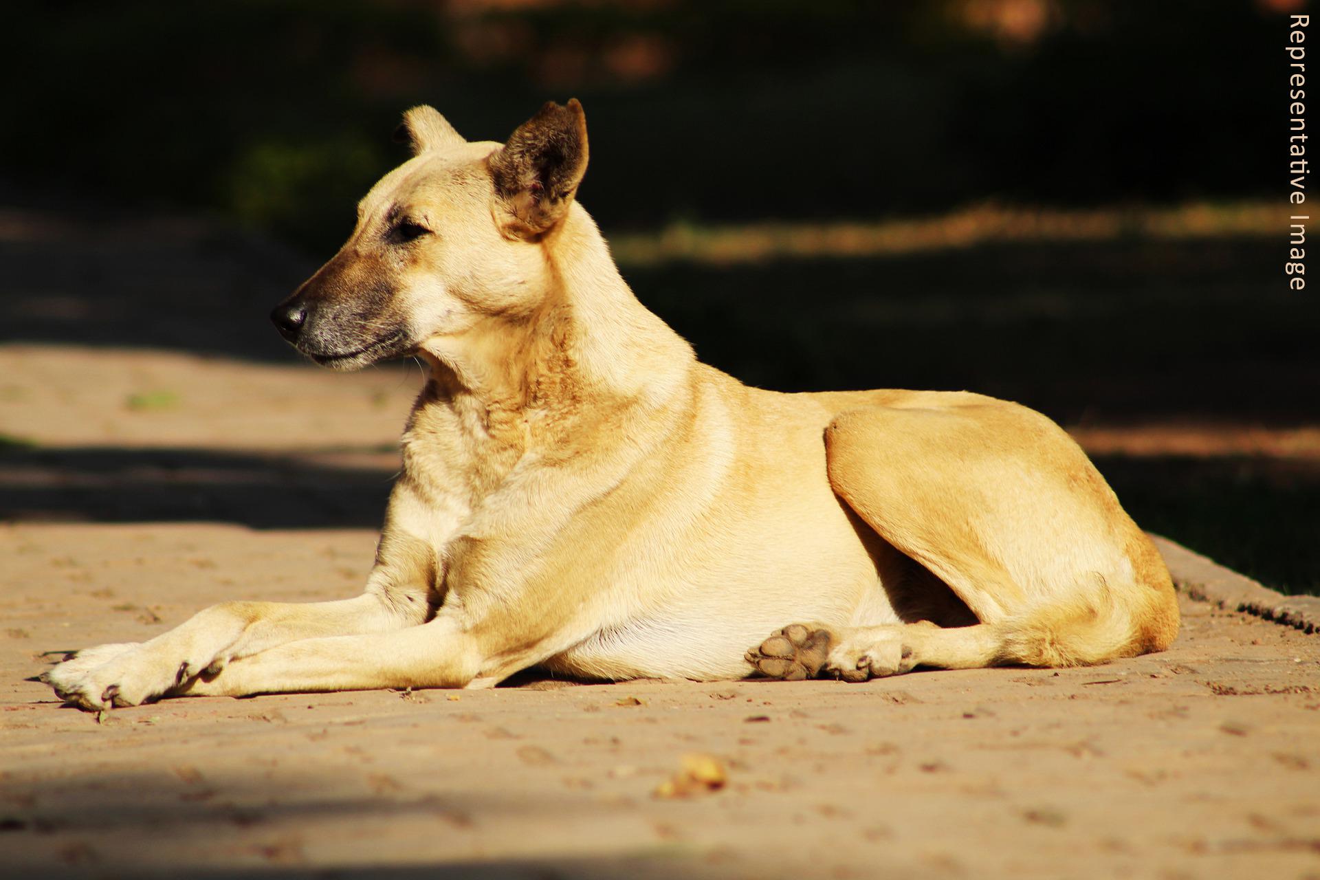 patna dog case - for blog