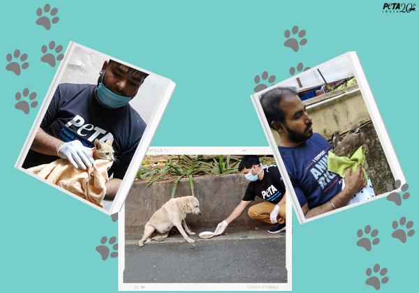 PETA India's Top Animal Rescues of 2020