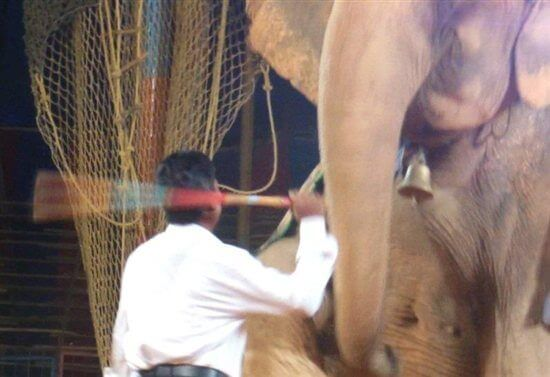 Following PETA India's Campaign, Great Prabhat and Several Other Circuses Close Down