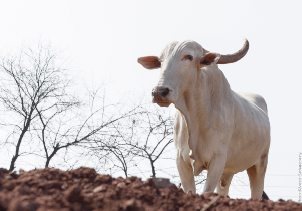 Central Government Notifies Draft Rules for Humane Methods in Animal Husbandry Procedures
