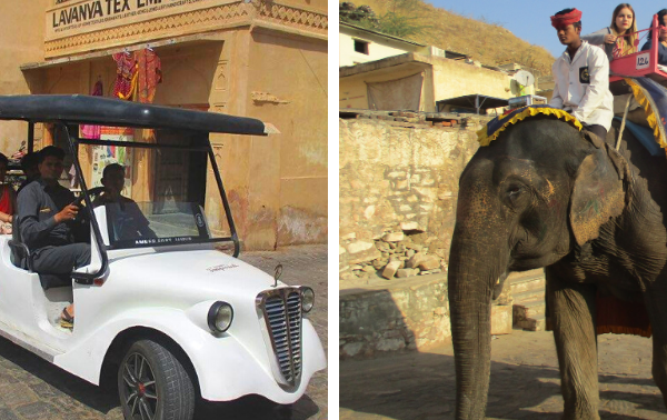 Central Government Committee Recommends Replacing Elephant Rides With Electric Vehicles at Amer Fort