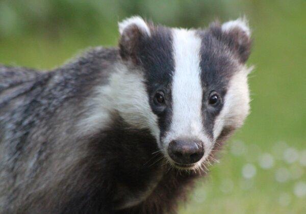 L'Oréal Group Bans Animal-Hair Brushes Following PETA Asia Badger-Hair Exposé