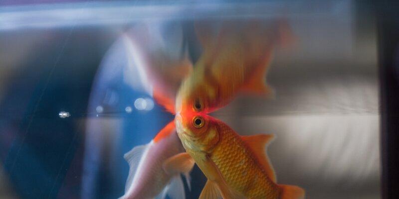 Aquaria: Animal Prisons