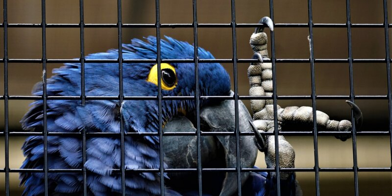 Caged Birds Have Nothing to Sing About