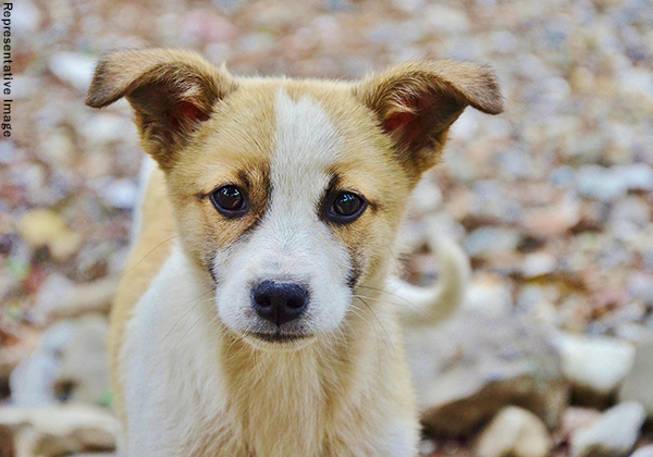 PETA India Offers Reward of Up to Rs 50,000 to Identify Person(s) Who Burned Puppies to Death