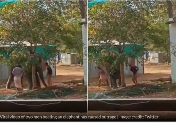 Update: Criminals Who Beat Up Elephant in Viral Video Charged