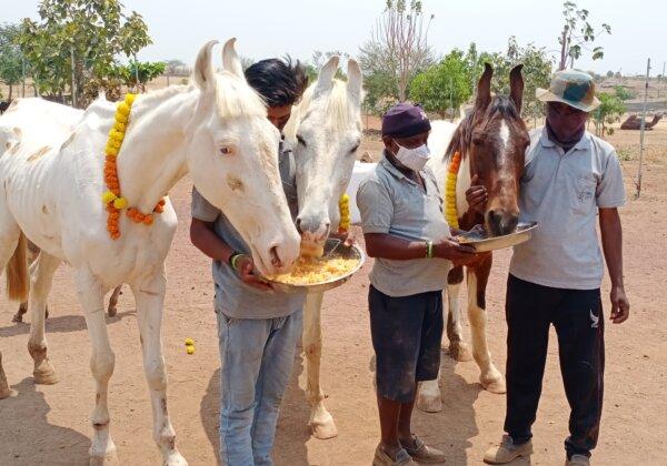 PETA India's Position on Religious Festivals