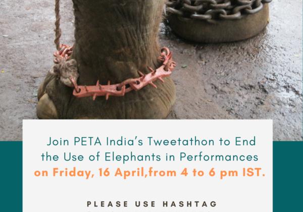 TODAY: Join the Tweetathon to End Elephant Performances