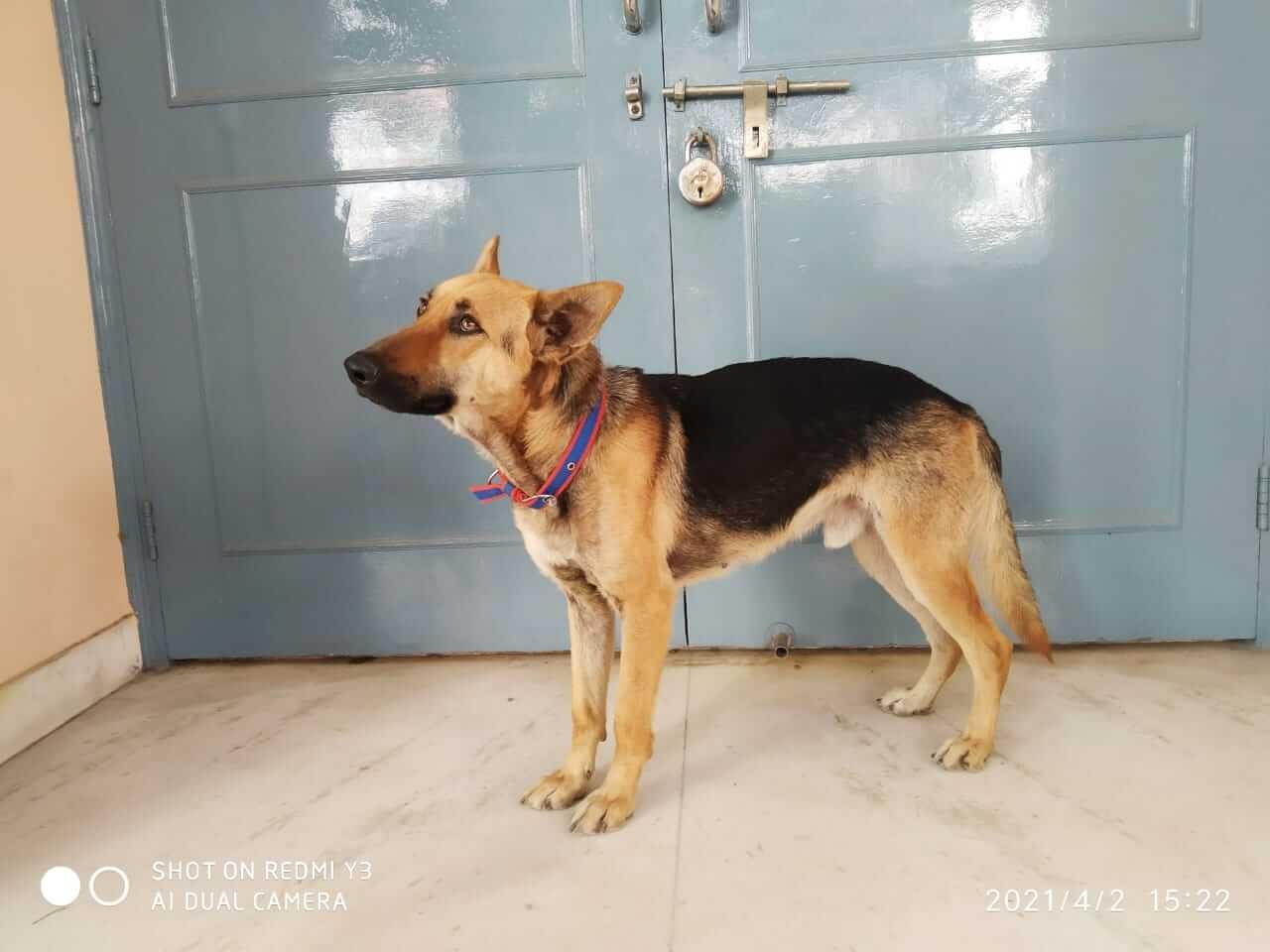 Jimmy rescued dog photo