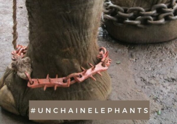 Sidharth Malhotra, Vijender Singh, Harshvardhan Rane, Bani J, and Ashmit Patel Speak Out Against Elephant Abuse