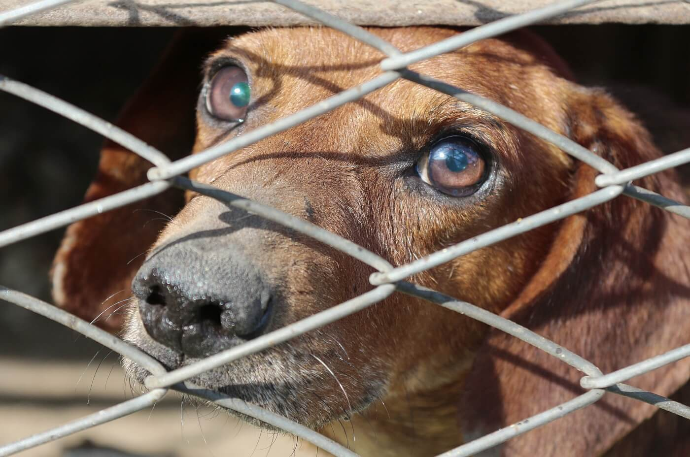 Urgent: Help Strengthen Prevention of Cruelty to Animals Act