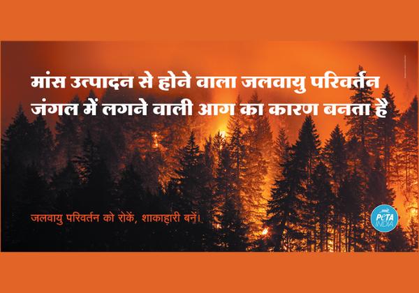 PETA India Responds to Uttarakhand Forest Fires With 'Go Vegan' Billboard