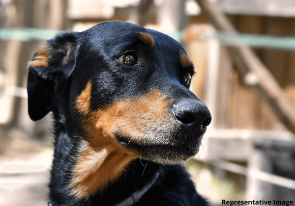 Following PETA India Complaint, Man Charged With Shooting and Killing a Dog