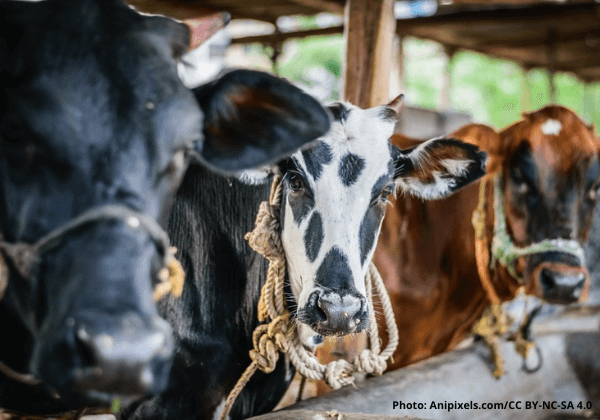 India Must Seize New Agricultural Opportunities as the World Leaves Dairy in the Dust