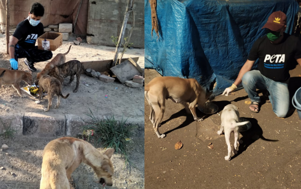 Animal Welfare Board of India (AWBI) Advises all States and Union Territories to Allocate Funds for  Community Animals, Following PETA India's Appeal