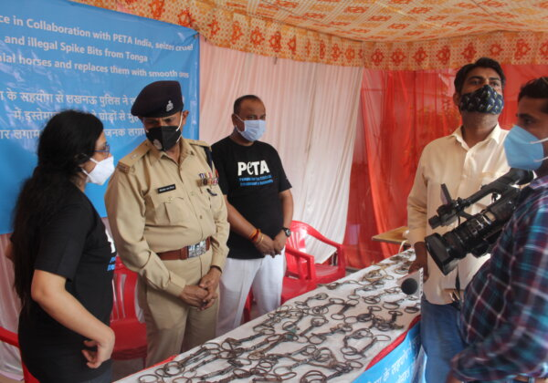 Lucknow Police and PETA India to Display 70 Seized Illegal Spiked Bits Used to Control Horses