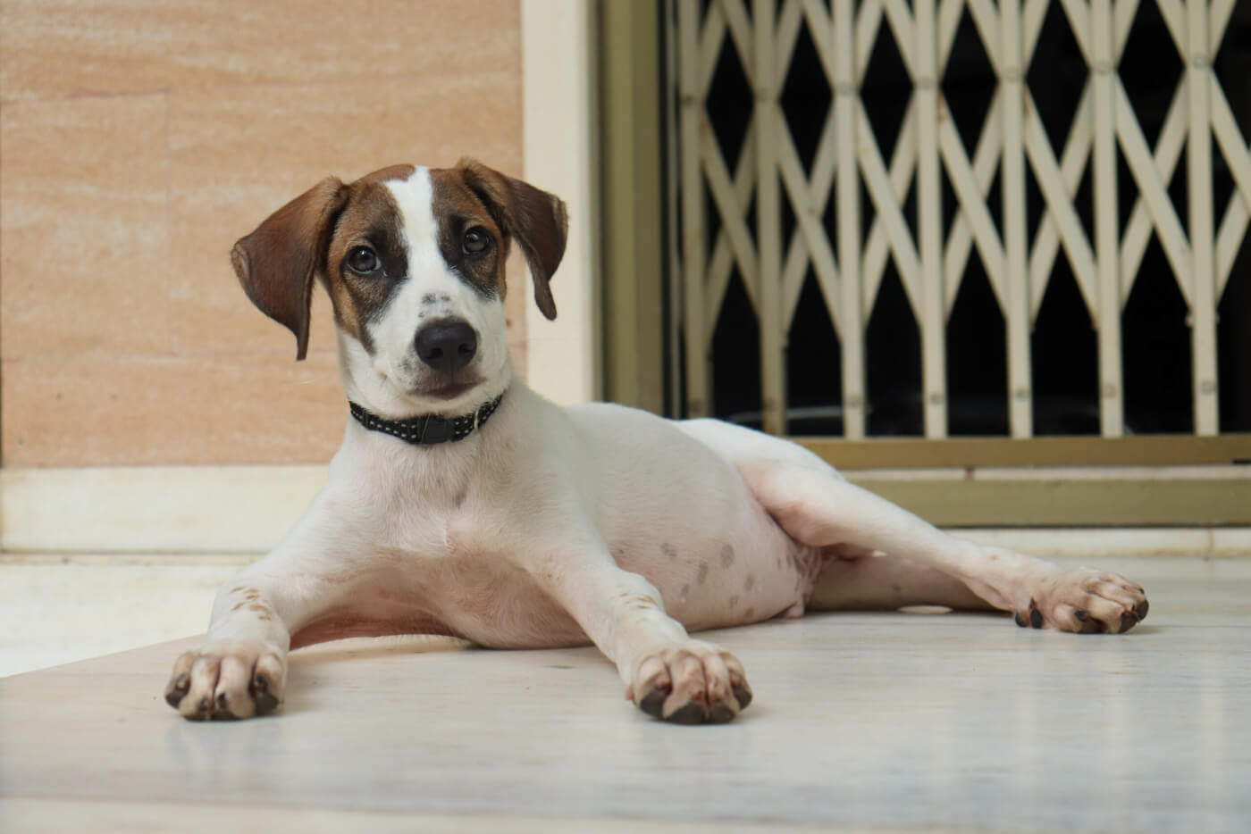 This Desi Dog Rescued by Raveena Tandon Could Be Your New Forever Friend