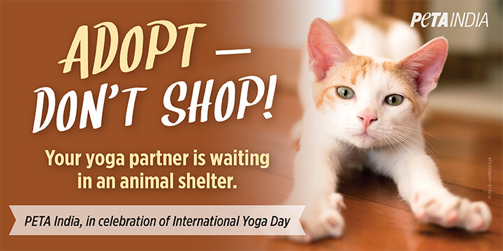 New International Yoga Day PETA India Billboard Campaign Encourages Animal Adoption