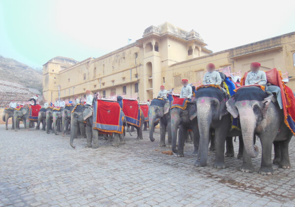 Torturing Elephants for Rides at Amer Fort Endangers Everyone