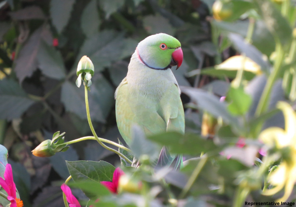 Forest Department Seizes Illegally Kept Parakeets From Two Homes Following PETA India's Complaint