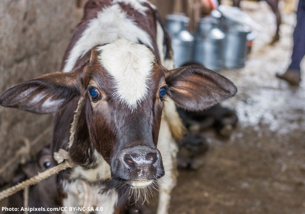 6 Videos the Dairy Industry Hopes You'll Never See
