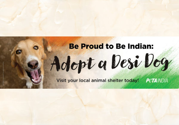 New Independence Day PETA India Billboard Campaign Encourages Animal Adoption