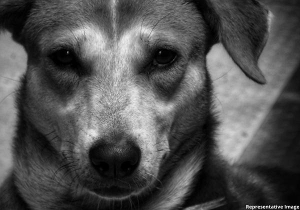 Kota Police Register First Information Report for Dog Rape Following PETA India Push