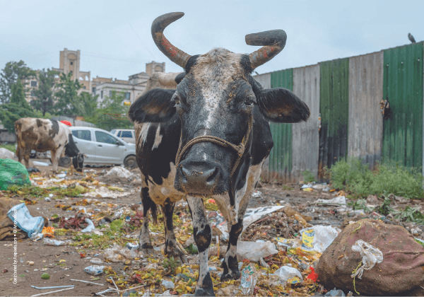Save Animals and the Environment! Join PETA India on 'World Clean-Up Day'