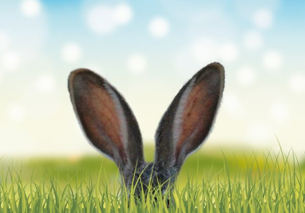 40 Bunny Facts to Make You Go 'Squee!'