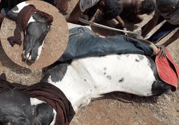 Horse Dies During 'Ponniyin Selvan' Film Shoot; Animal Welfare Board Calls For Enquiry Following PETA India Complaint