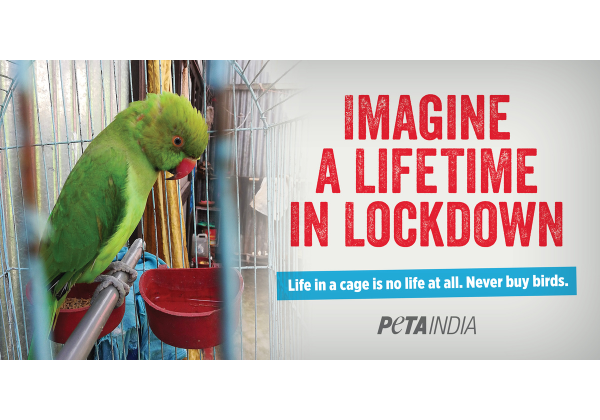 PETA India's 'Eternal Lockdown' Display Urges Freedom for Caged Birds